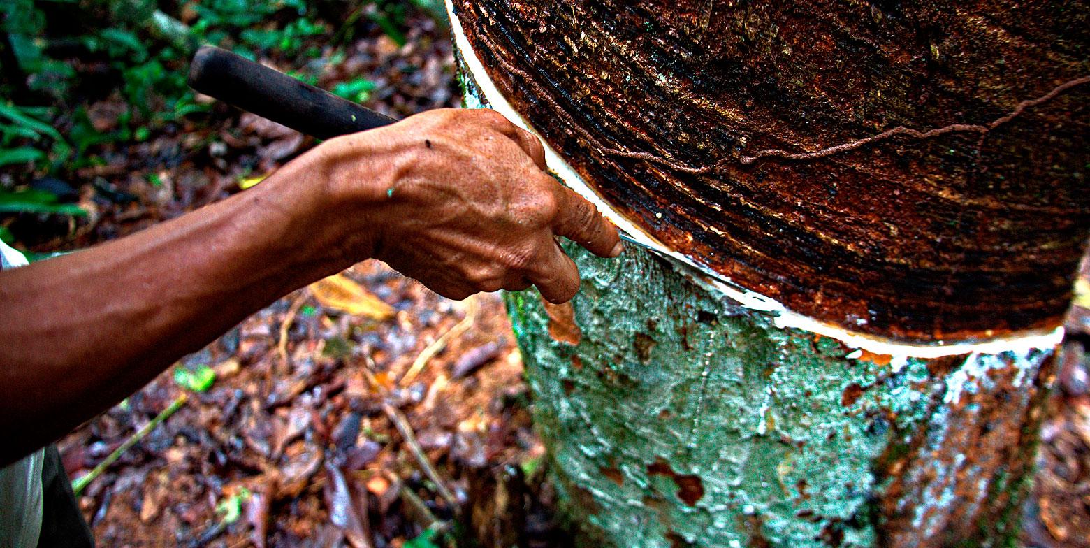 Tree Sap Brings Prosperity Akzente