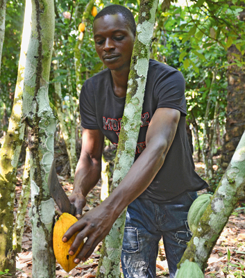 Karim Azees (35) and his wife cultivate four hectares of land in Afolu Ise, which is located in the federal state of Ekiti in south-western Nigeria.