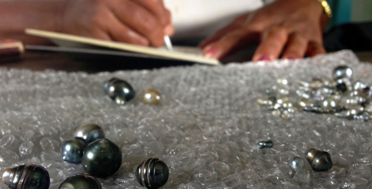 Cultured pearls are to become established as an alternative to fishing as a source of income for Fiji Islanders.