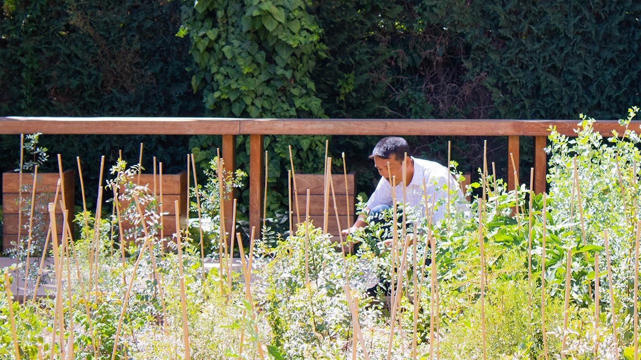 Amman, Jordanien: Durch schnelles Wachstum, viel Beton und Wärmeinsel gerät die lokale biologische Vielfalt und die Luftqualität in vielen Städten unter Druck. Die Verbesserung der städtischen grünen Infrastruktur kann dies abmildern. In Amman beispielsweise sollen dichte, biodiverse und vielschichtige städtische Wälder einen Ausgleich zwischen der immensen Landknappheit und dem Bedarf an funktionierenden Ökosystemen schaffen.<br />© Katharina Manecke